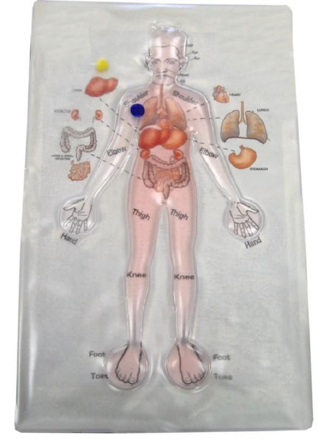 Human Anatomy Gel Maze